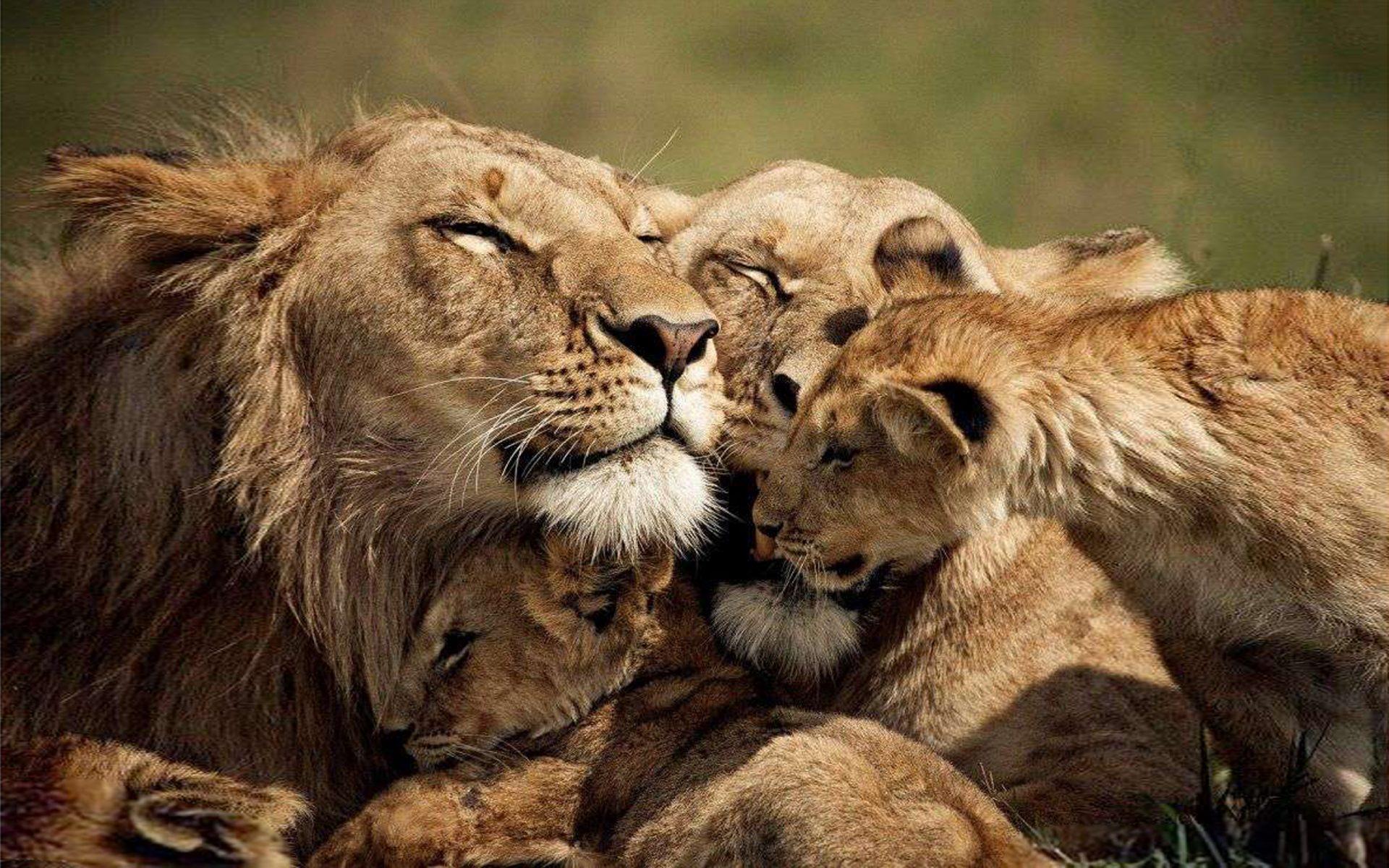 Влюбленные животные картинки с надписями